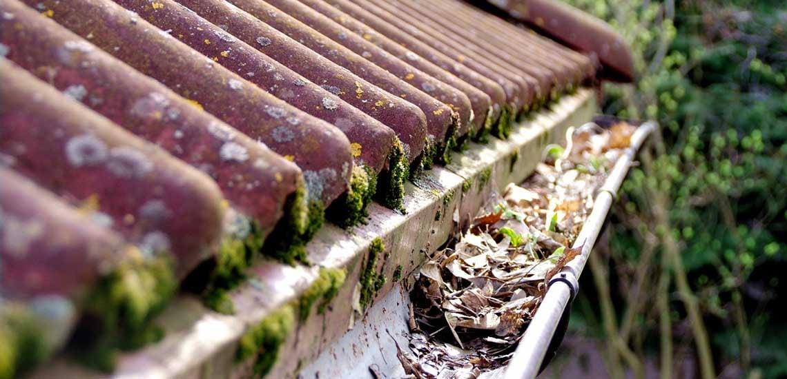 Mohásodás a tetőn